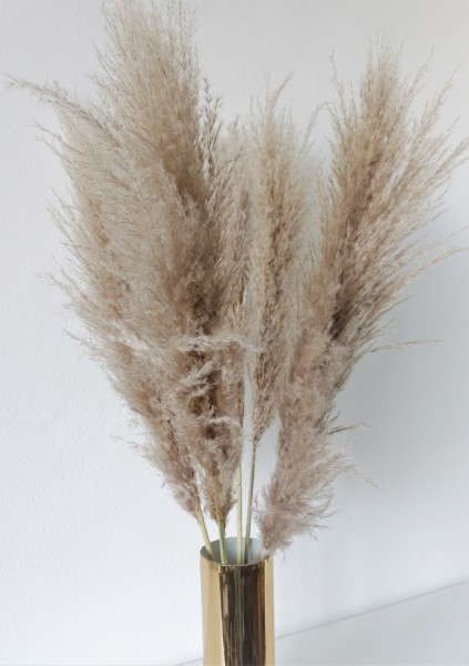 10 Stk. Getrocknetes Pampasgras ca.100cm natur Wedel Trockenblumen Dekoblumen Dried Flowers